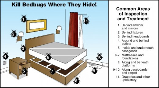 Bed Bug hiding places